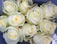 Luxury bouquet of Avalanche roses.